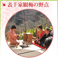Outdoor tea ceremony of the Omotesenke enjoying ume blossom